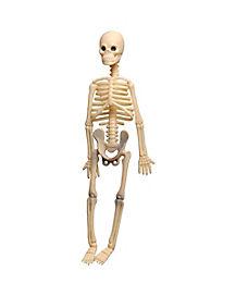 8 inch Skeleton