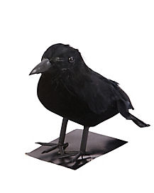 5 in Black Crow - Decorations