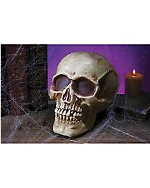 8 in Skull - Decorations