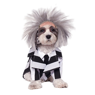 Beetlejuice Dog Costume - Beetlejuice