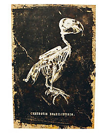 Skeleton Bird Canvas - Decorations