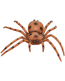 Brown Spider