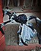 21 Inch Black Jumping Spider Animatronics - Decorations